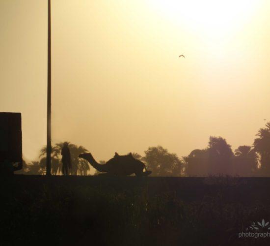 Жаркий Египет